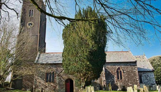 Church Exterior 15th Century Medieval Churchyard Yew Tree Tower Little Torrington