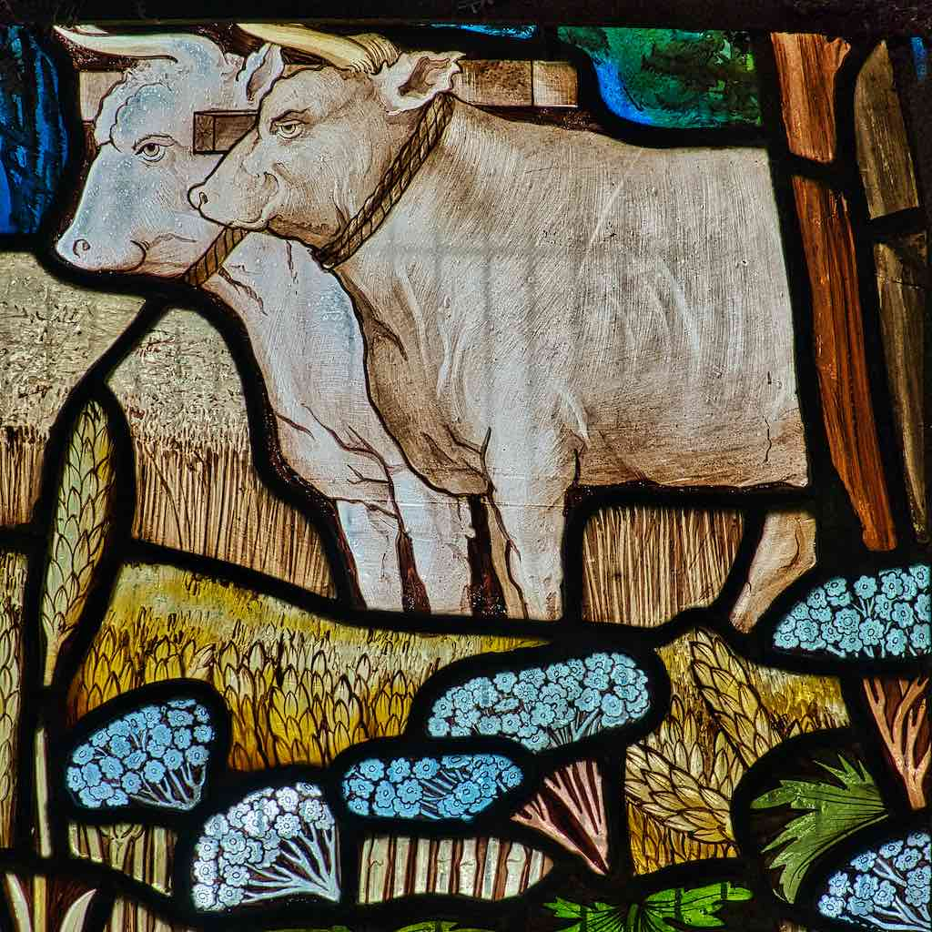 Stained Glass Parable Of Sower Oxen Victorian 19th Century Fouracre And Watson Lydford